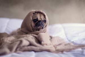 dog bundled up image